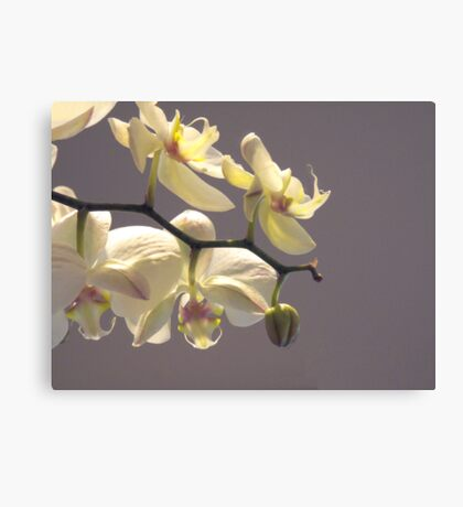Orchid Collection - 6  Canvas Print