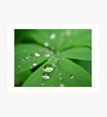 Dewdrops and Reflection Art Print