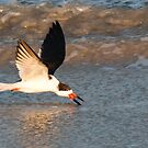 Skimmer skimming the water at Cape Canaveral, Florida by ArtThatSmiles