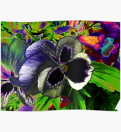 Pansies in disguise.. Poster
