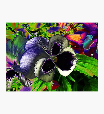 Pansies in disguise.. Photographic Print