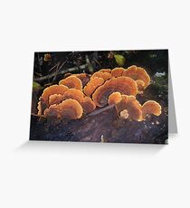 Fungi 11 Greeting Card