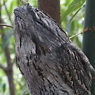 Tawny Frogmouth by stocks14