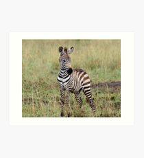 Zebra Baby Kunstdruck