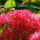 Flowers - Ficifolia Eucalypt - Drouin  by Bev Pascoe