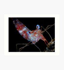 Shrimp Makro Art Print