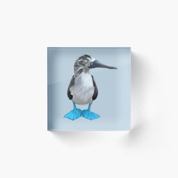 Sula nebouxii - blue rules Acrylic Block