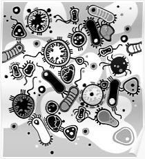 Eukaryote (schwarz/weiß) Poster
