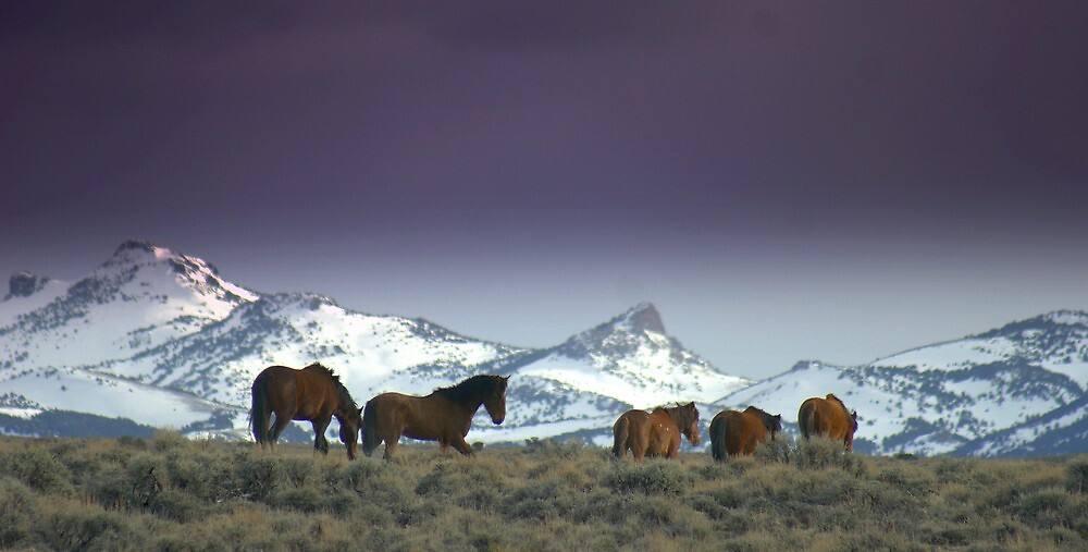 Following The Trail Of  Wild Horses  by Jeanne  Nations