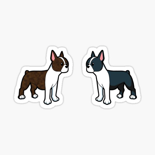 Paire de Boston Terrier mignon Sticker