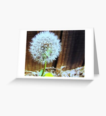 Oh Dandelion! Greeting Card