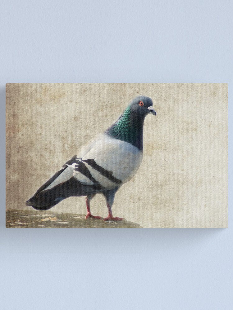 Alternate view of Pigeon Canvas Print
