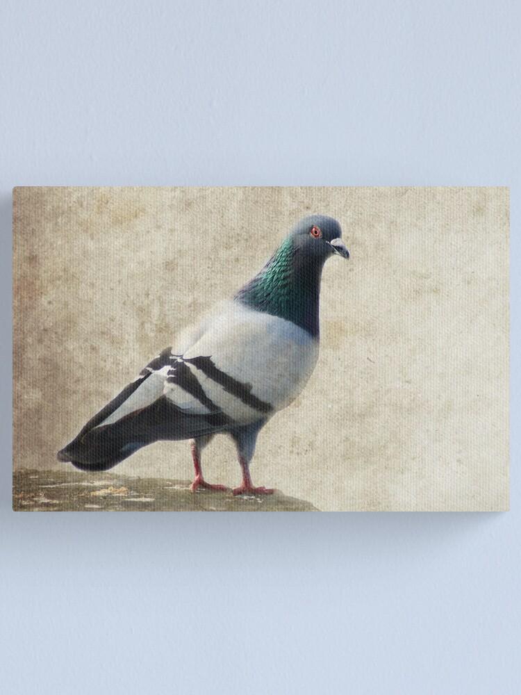 Alternate view of Pigeon Canvas Print