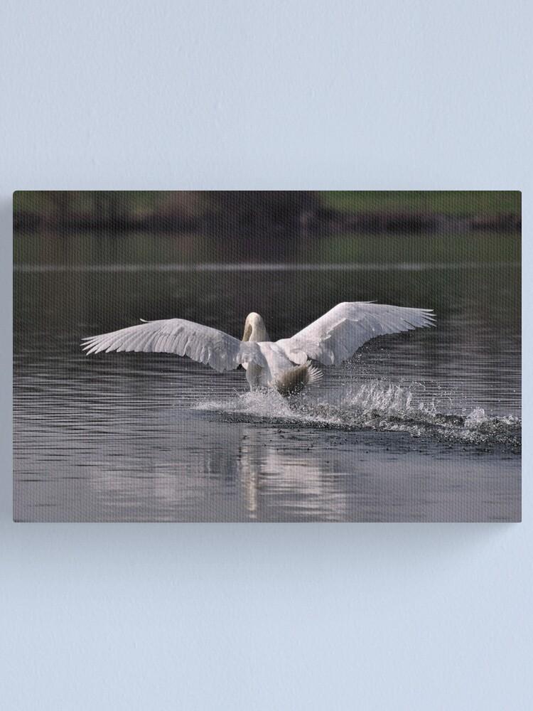 Alternate view of Swan: Landing Canvas Print