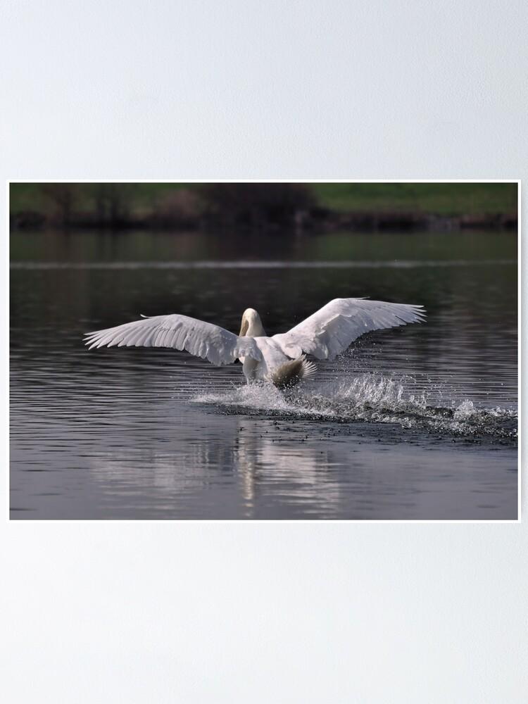Alternate view of Swan: Landing Poster