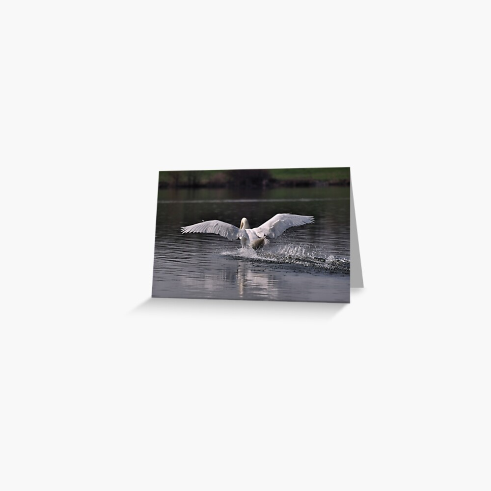 Swan: Landing Greeting Card