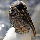 Wood Stork by RebeccaBlackman