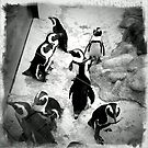 Penguins by Colleen Drew