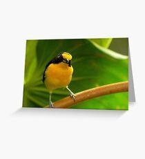 Curious Bird Greeting Card