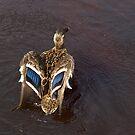 Ruffled Feathers by moor2sea