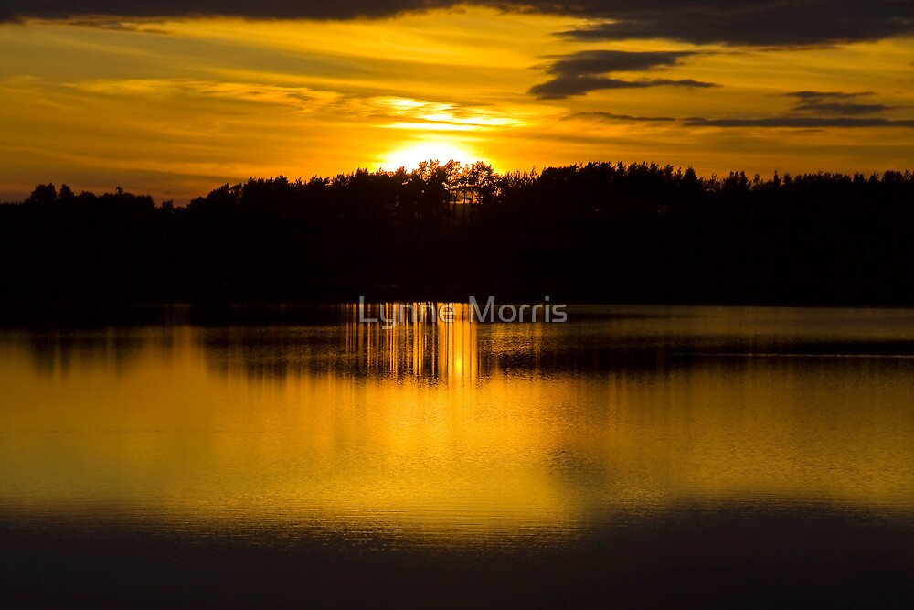 Pure Gold by Lynne Morris