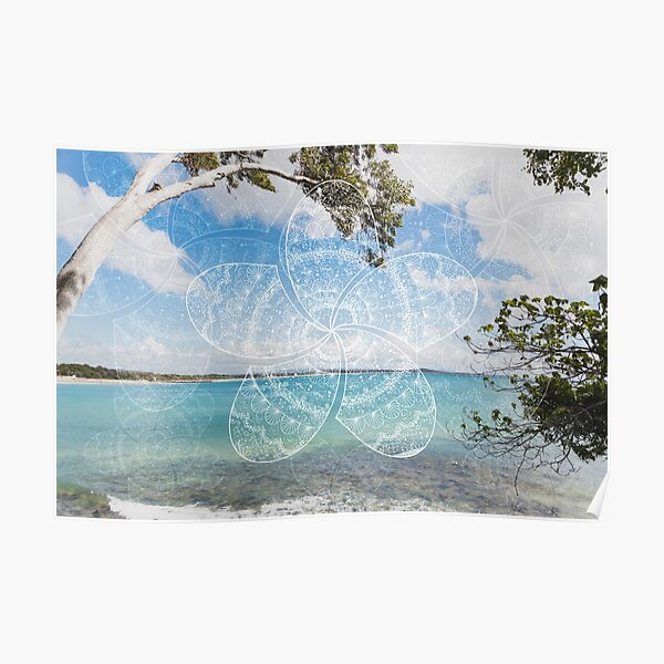 white frangipani mandala on noosa beach Poster