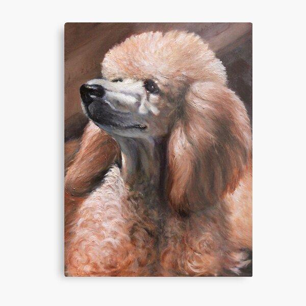 Christina Standard Poodle Metal Print