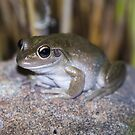 motorbike frog by col hellmuth
