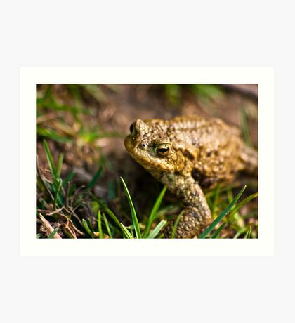 Toad of Toad Hall Art Print