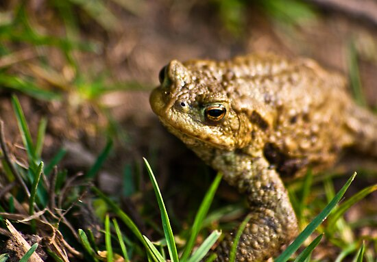 Toad of Toad Hall by Trevor Kersley