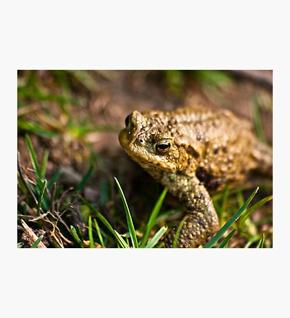 Toad of Toad Hall Photographic Print