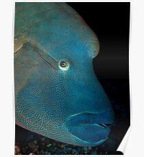 Napoleon fish Poster