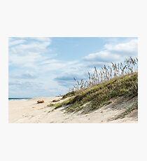 Beach Grass on Dunes Photographic Print