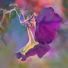 Morning Glory - purple by Tummy Rubb Studio