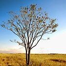 Single Tree by john forrant