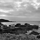 St Abbs Harbour by Lindamell