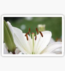 Pure White Beauty Sticker