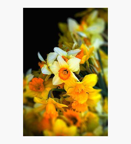 Narcissi Photographic Print