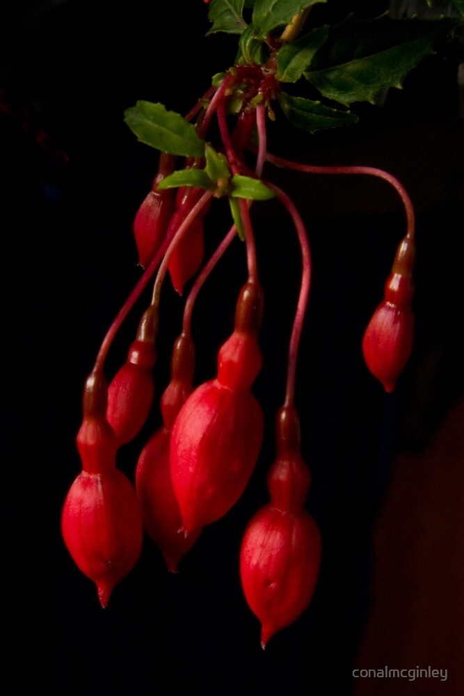 red on black by conalmcginley