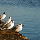 Seagulls on the pier, Dublin by heatherbyrne