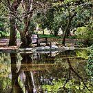 A Quiet Place  by CarolM