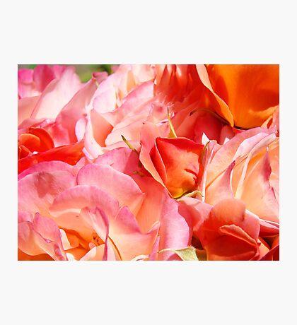 Rose Bouquet Orange Pink Roses Floral Gaden Baslee Troutman Photographic Print
