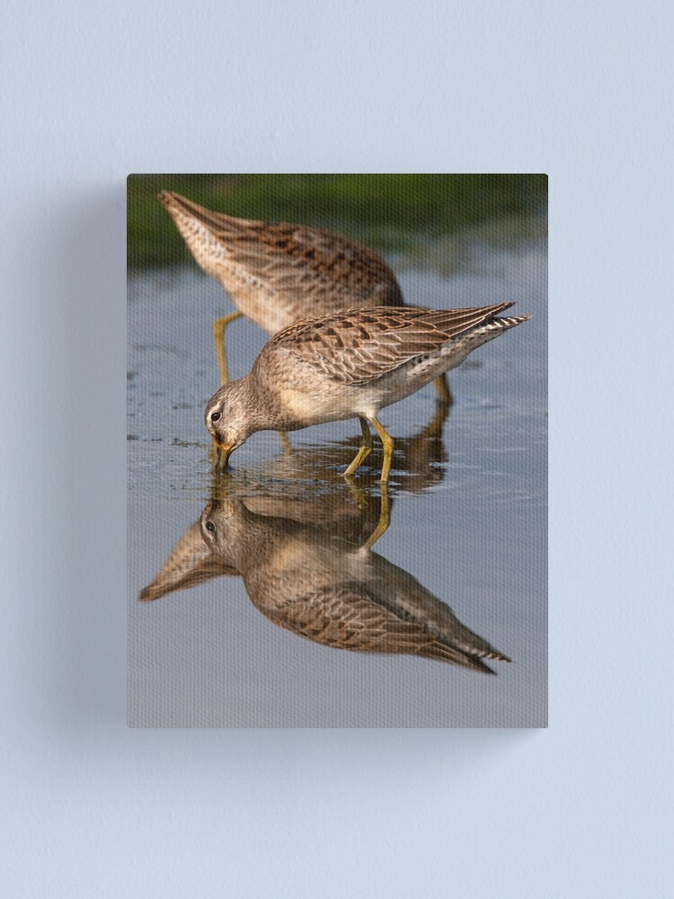 Alternate view of Dowitcher Reflections Canvas Print