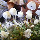 Mini mushroom world. by Livvy Young
