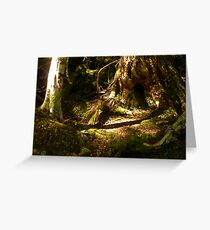 Archaic Beech Forest - Routeburn Track, Fiordland and Mount Aspiring National Parks.  Greeting Card