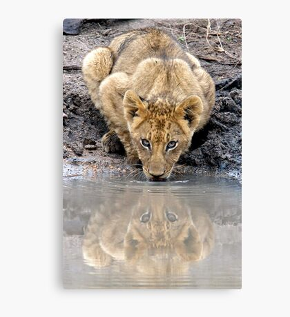 I See You....Twice Canvas Print