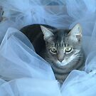 Little Kitty in Tulle by Lisa Quenon