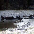 snowy Oregon forest , Fox Creek 8 by Dawna Morton
