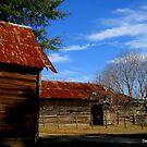 Madison County Tobacco Barn by Debbie Robbins