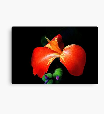 Yes I Canna! Canvas Print